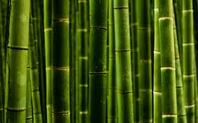 Extract of bamboo