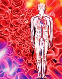 Cholesterin Balance